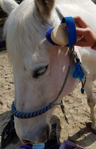mediation equine-bien etre-equithérapie-ressource
