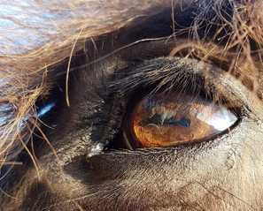 les crins de la resilience-mediation equine -contact