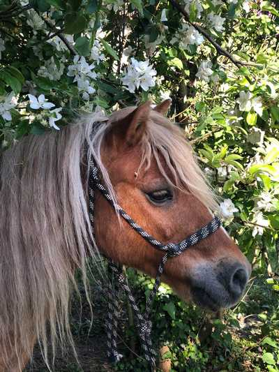 therapie-avec-le-cheval-poney-billy