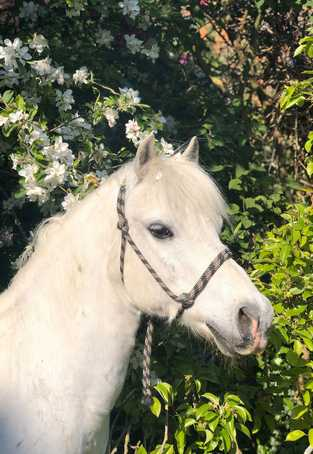 thérapie-avec-le-cheval-poney-prince