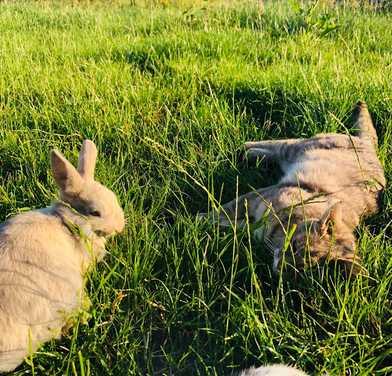 mediation-animale-lapin-love