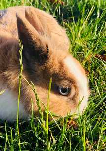 mediation-animale-lapin-volcan