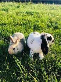 mes-animaux-mediateurs-lapins-blum-love