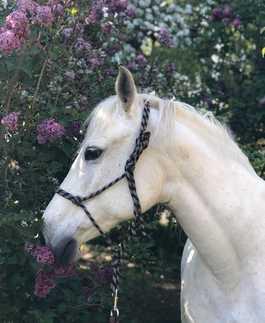 mes-chevaux-et-poneys-mediateurs-annabelle