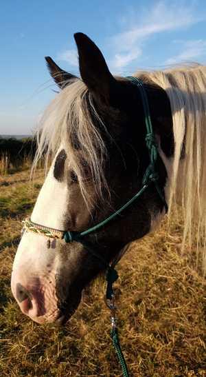 mes-chevaux-et-poneys-mediateurs-elyse