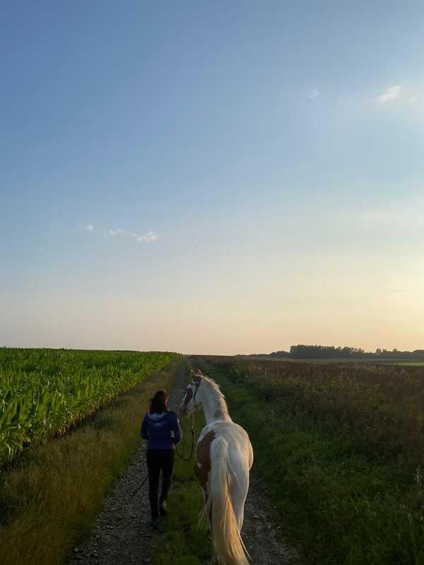 therapie-avec-le-cheval-animal-nomade-autonomie-confiance