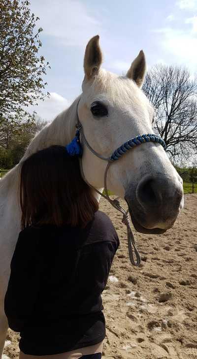 therapie-avec-le-cheval-animal-sensible