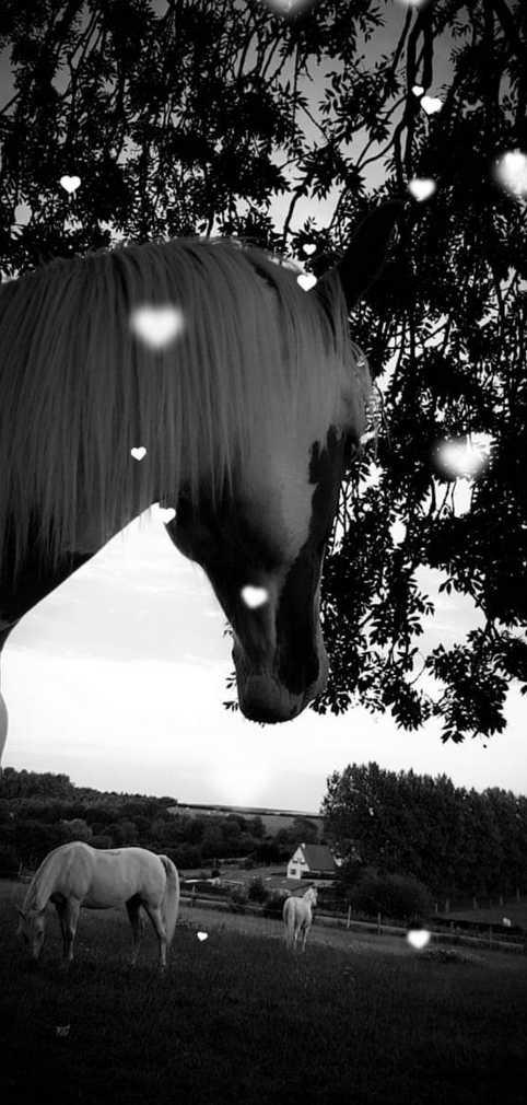 therapie-avec-le-cheval-mediateur-ethologie-observation-gregaire