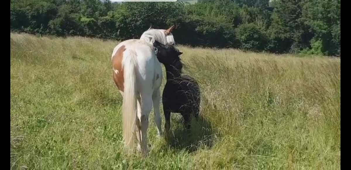 therapie-avec-le-cheval-mediateur-grooming