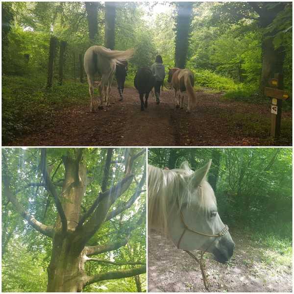 bien-etre-avec-le-cheval-samedi-septembre-marche-equifeel