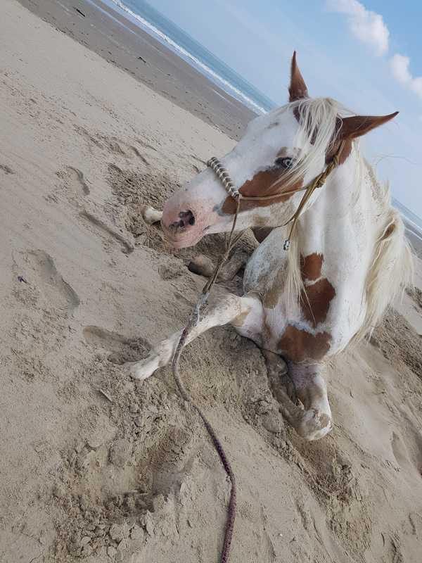 bien-etre-avec-le-cheval-séances-samedi-plage