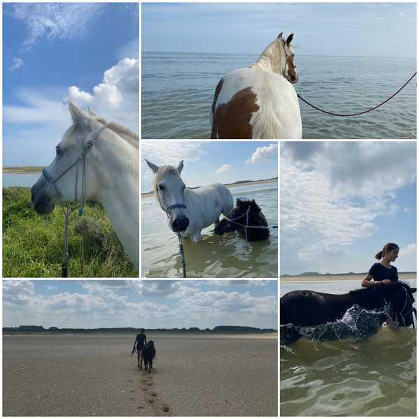 bien-etre-avec-le-cheval-journée-plage-mer-poneys-septembre